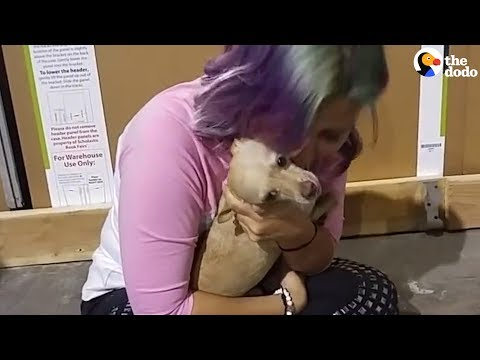 Dog Runs Away To Find First Love | The Dodo