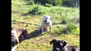 Off Leash Dog Training In Los Angeles Orange County
