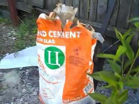 Черенкование мандарина в домашних условиях 240