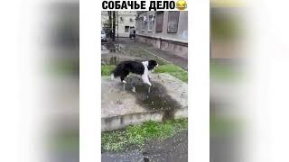 Собачье дело) Лучшие приколы 2021 Апрель Best Coub 2021