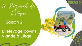Elevage bovins viande à Liège - Le Régional de l'étape