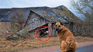 Собака в истерике металась по деревне, видя как её хозяина завалило под старым домом