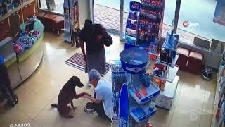 В Турции раненая собака пришла в аптеку за помощью