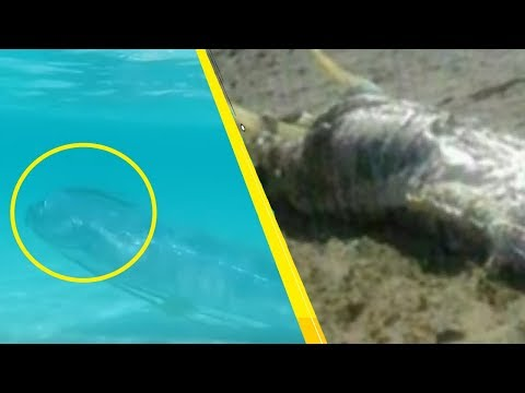 5 Most Mysterious Creatures Caught in Spain!