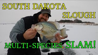 EPIC Ice Fishing SOUTH DAKOTA GIANT Crappies Yellow Perch White Bass AND Northern Pike Part 1