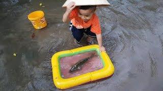 Mưa Cá Chép Cánh Khổng Lồ Trò Chơi Bạn Ken ❤ ChiChi ToysReview TV ❤ Đồ Chơi Fun Song Bài Hát Vần Thơ