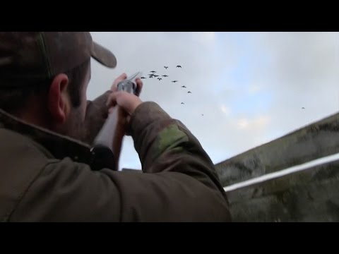 The Shooting Show – geese and grouse in Scotland PLUS the An