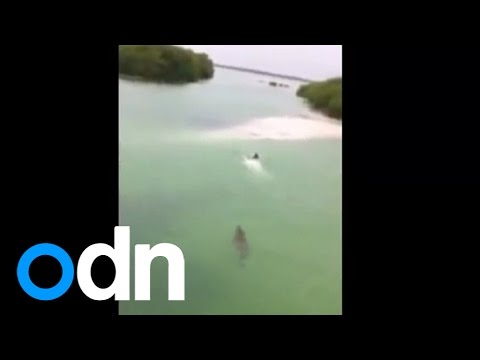 Clint August - Shocking video: Massive crocodile chases swimmer in Mexico