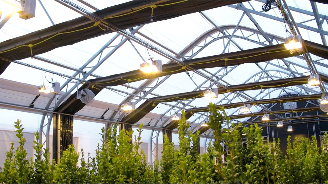 30 x 80 weatherport growport automated light deprivation 30 x 80 weatherport growport automated light deprivation greenhouse in 4k aloadofball Images