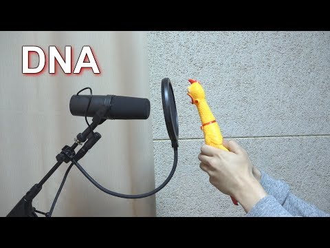 BTS (방탄소년단) 'DNA' Chicken Cover