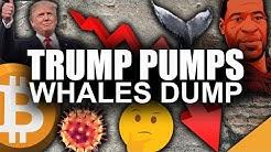 Trump PUMPS Bitcoin (Why Richest Bitcoin Whales Dumped BTC 10%)
