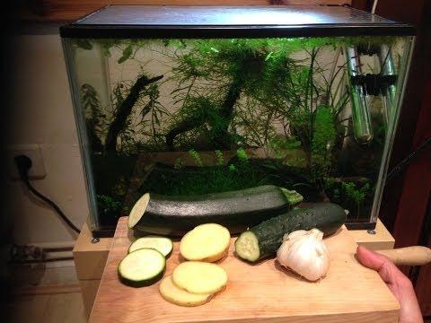 Feed Vegetables To Tropical Aquarium
