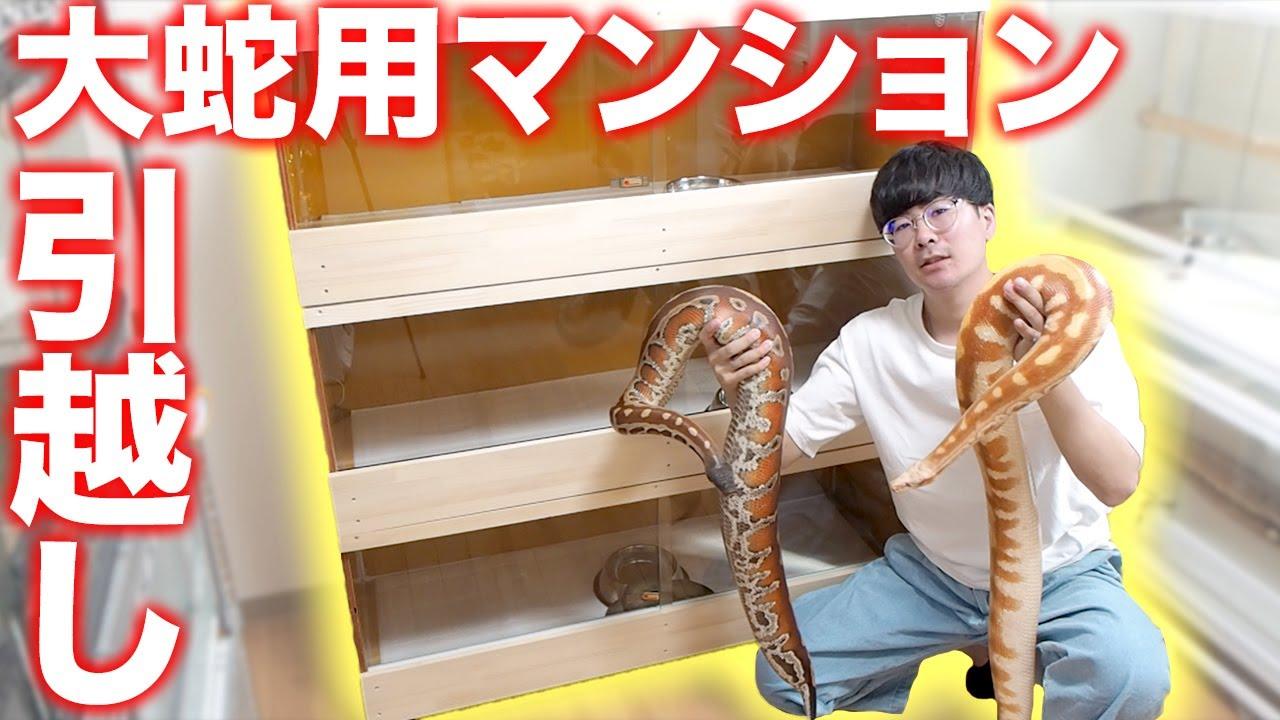 大蛇用ヘビマンション完成!大蛇をお引越しします