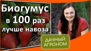 Биогумус: как применять для удобрения