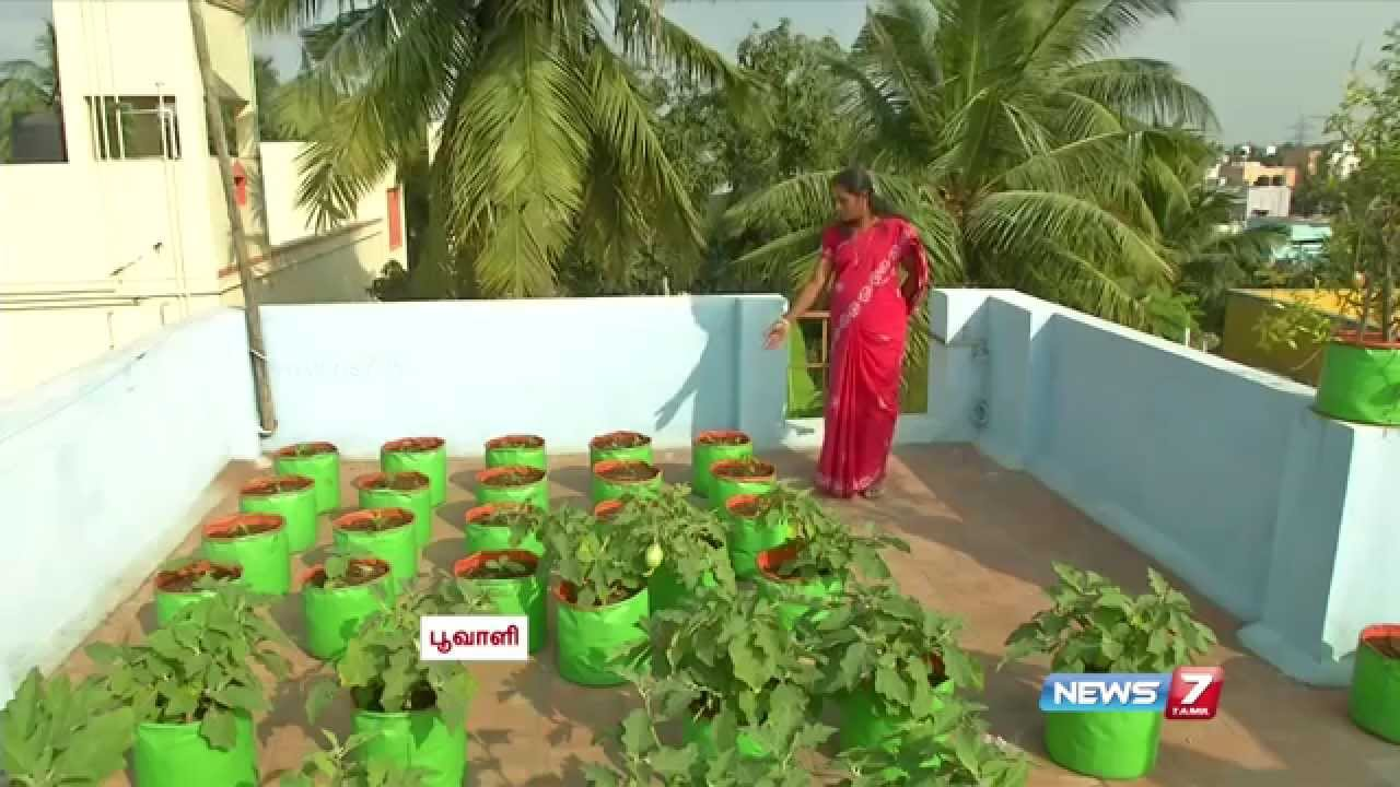 How To Start Gardening Vegetables Part - 47: How To Grow Vegetables In A Container Or Pots On The Terrace | Poovali |  News7 Tamil - YouTube