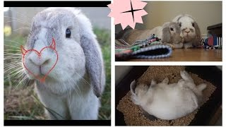 Pros and Cons of Owning Rabbits