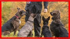 Kosten für die Hundeschule: Wie teuer ist eine gute Ausbildung?