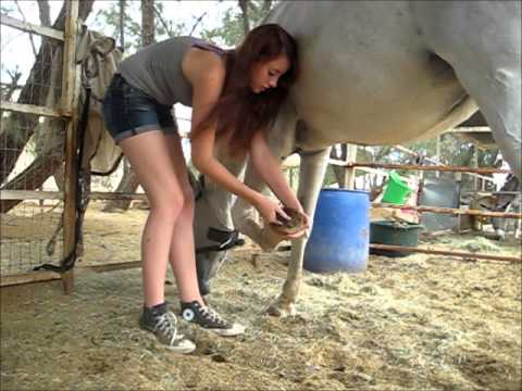 How to clean out a horses hooves