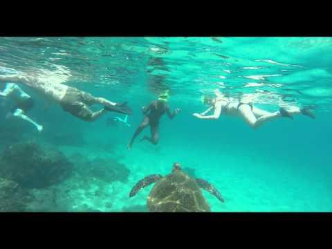 Snorkeling To See Shark & Turtle in Hanauma Bay Oahu Hawaii
