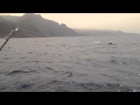 MADEIRA - Blue Marlin Fishing 2012