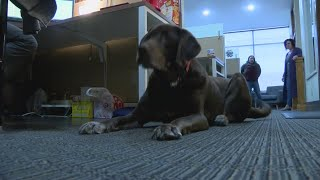 Dogs showing signs and symptoms of flu