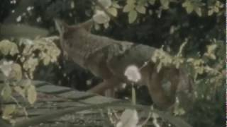 Teresa Rotschopf - LOVE  (Official Video)