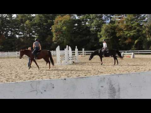 Stonehill Equestrian 2016 Preview
