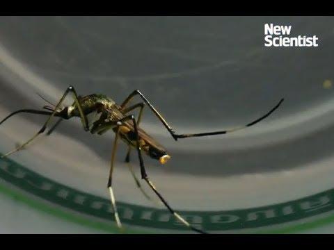 Zika virus to treat brain cancer!
