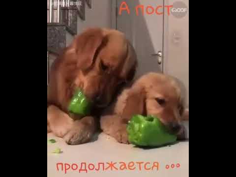 Милые собачки .. для хорошего настроения . Пост продолжается
