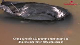 SỰ THẬT về Cá Piranhas được Jeremy Wade (River Monsters - Thuỷ Quái) giải đáp | THEGIOIDONGVAT.CO