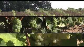 Côtes de Gascogne : histoire & cépages