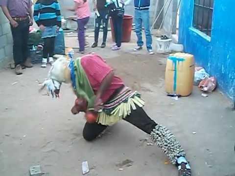 La danza del venado por fariseo de Baca
