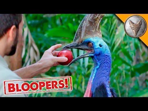 Giant Bird Makes Applesauce!
