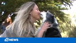 Reunited! San Francisco owner reunites with missing dog who was stolen 4 months ago
