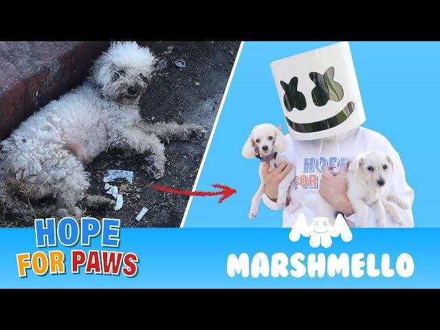 Marshmello ft. Hope For Paws - HAPPIER together compilation.