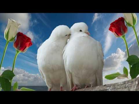 White Love Birds Photos