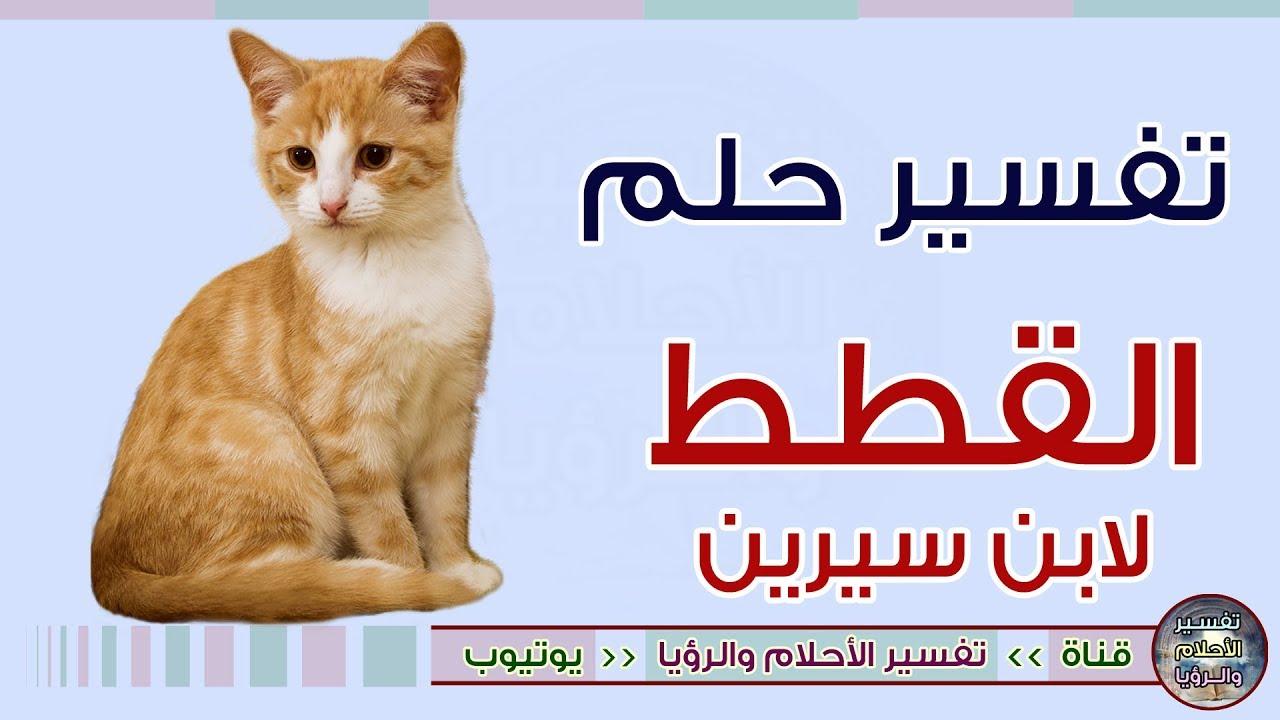 تفسير حلم رؤية القطط في المنام لابن سيرين Youtube