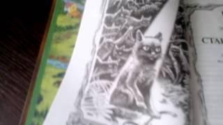 Обзор на книгу Коты Воители.Стань диким!