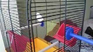 Приручение попугая День 3-4. Побег попугая. Попугай начал чирикать и кушать с кормушки