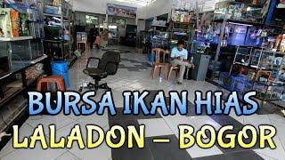 Bursa ikan Hias Laladon Bogor