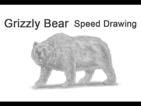 How To Draw A Grizzly Bear Growling