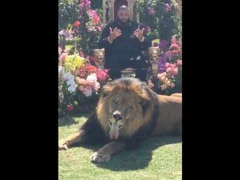 DJ Khaled photo shoot  with real life lion for Major Key album