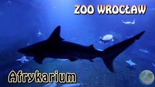Wycieczka do Wrocławia. Afrykarium (Oceanarium) Zoo Wrocław. Fauna i flora Afryki. [4K]