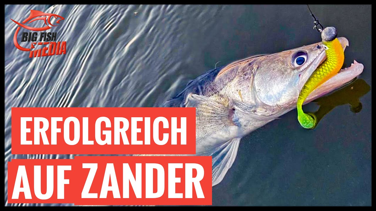 Erfolgreich angeln auf Zander - Unterwegs im Hafen mit Veit Wilde