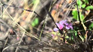 Rainer Rehwinkel meets the Omeo Storksbill