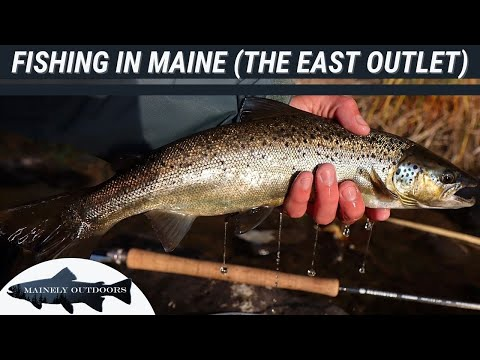 Fly Fishing The East Outlet, Maine | Landlocked Salmon And Brook Trout Fishing