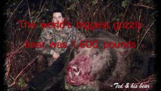 The World's Biggest Grizzly Bear