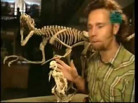 Dinosaur to bird evolution 4 of 5