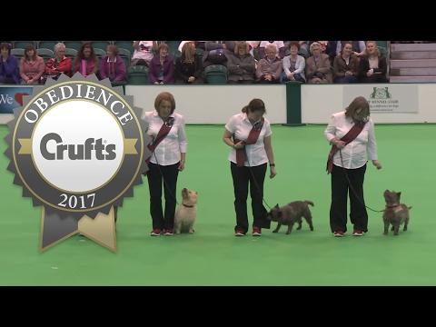 Obreedience Group Heelwork - Part 1 | Crufts 2017