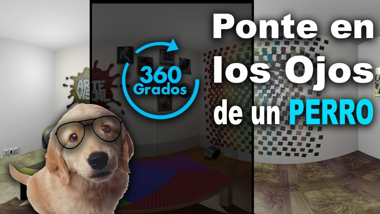 Cómo ven los Perros? 360° 4K